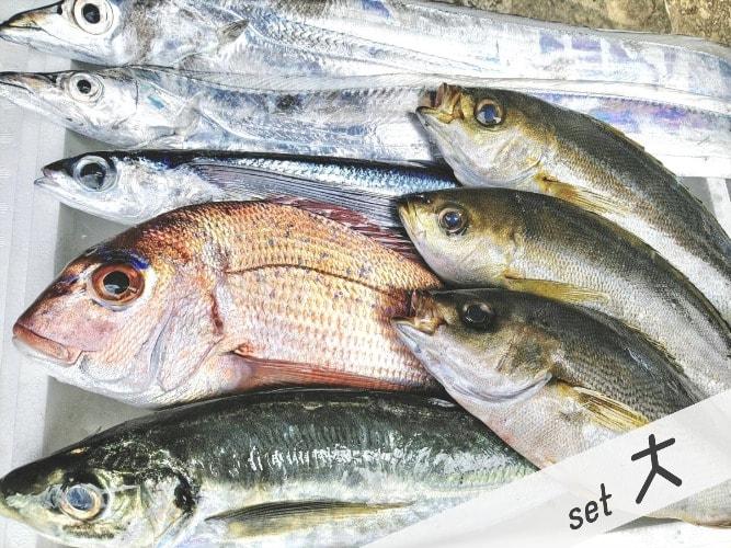 鮮魚セット大の写真