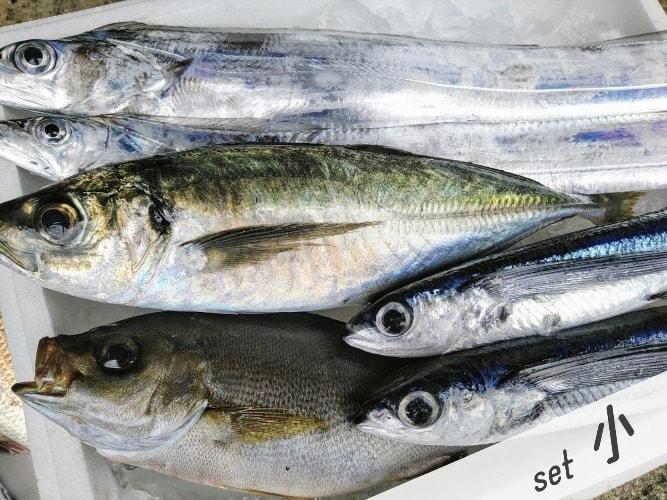 鮮魚セット小の写真
