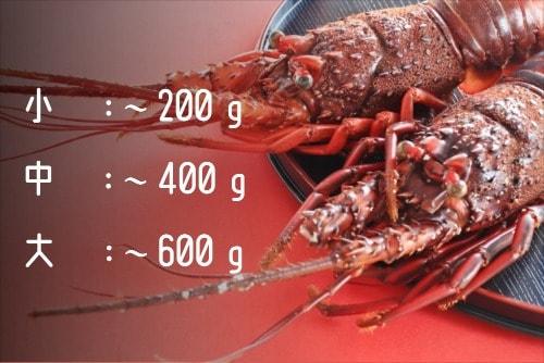 伊勢海老の写真とサイズ別目安重量